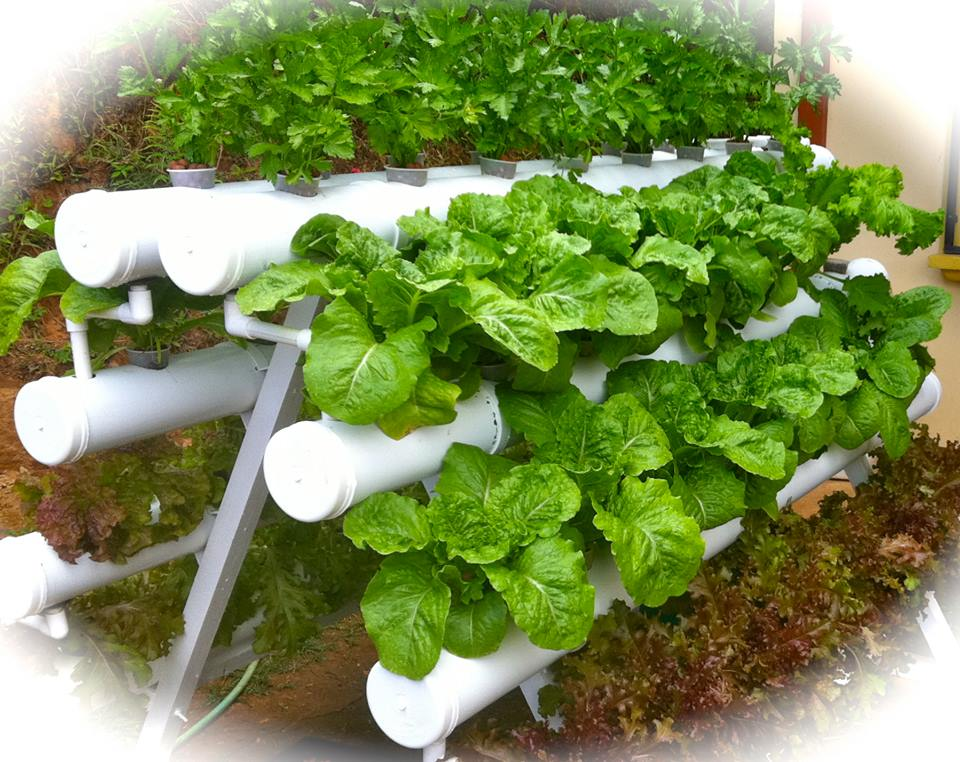 Commercial Hydroponic Garden Systems Costa Rica Hydroponics